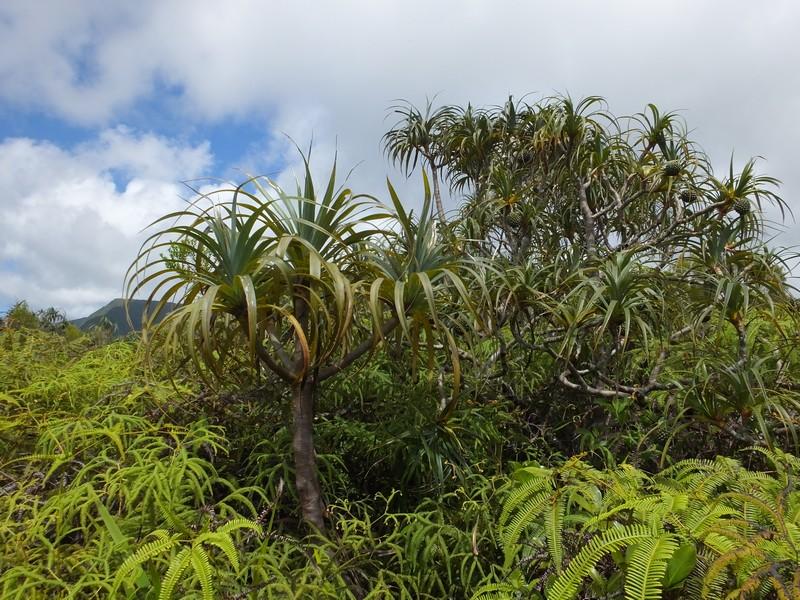 La Réunion automne 2015 7_pand10