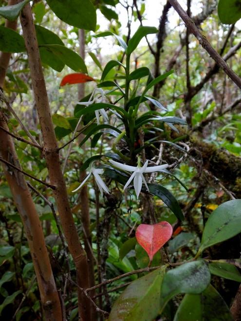 La Réunion automne 2015 83_jum11