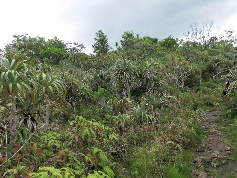 La Réunion automne 2015 8_pand10