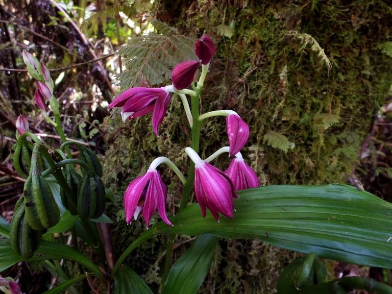 La Réunion automne 2015 90_pha11