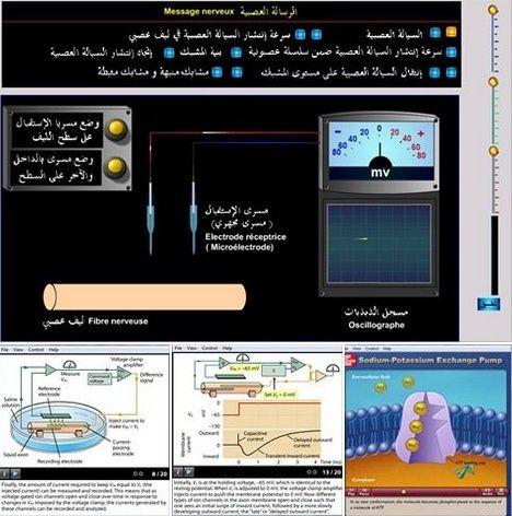 فلاشات وبرماجيات معربة واحنبية  لوحدة دور البروتينات في الاتصال العصبي Screen16