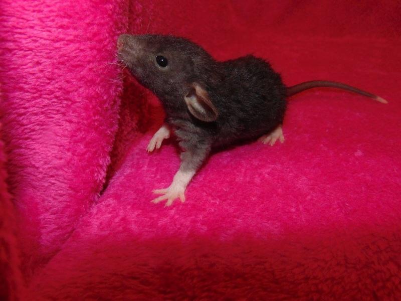De retour dans le monde du rat 12366010