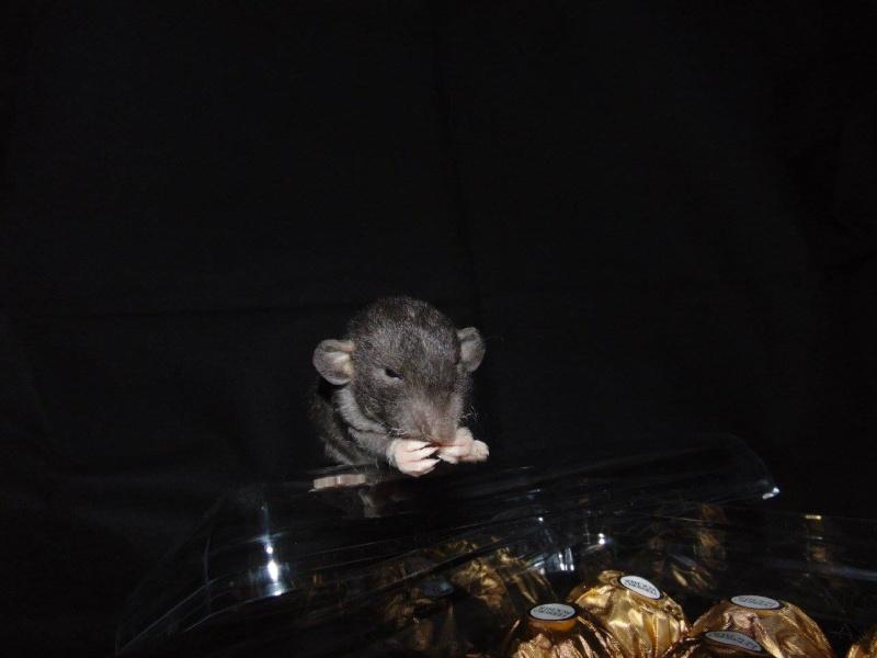 De retour dans le monde du rat 12401910