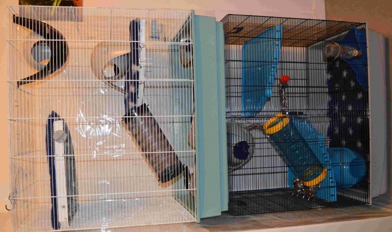 """Ma """"nouvelle"""" cage Dsc_0012"""