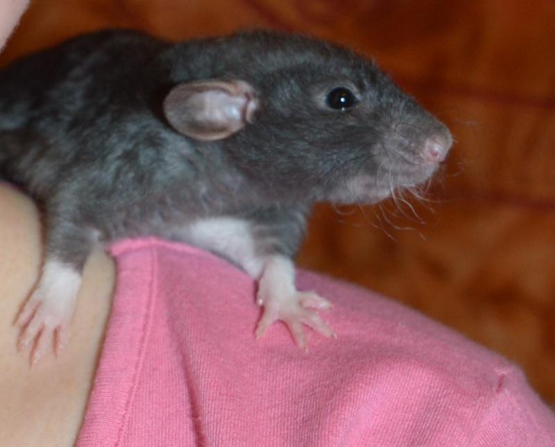 De retour dans le monde du rat Dsc_0027