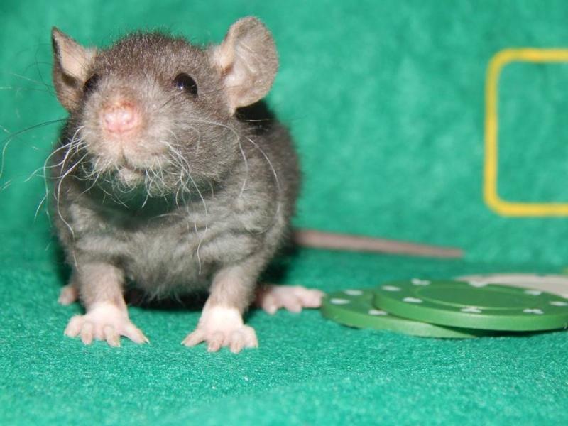 De retour dans le monde du rat Monet_10