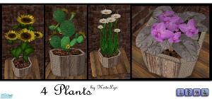 Цветы для дома - Страница 9 Image208