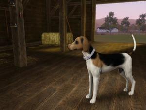 Собаки - Страница 7 Image405