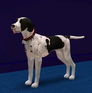 Собаки - Страница 7 Image414