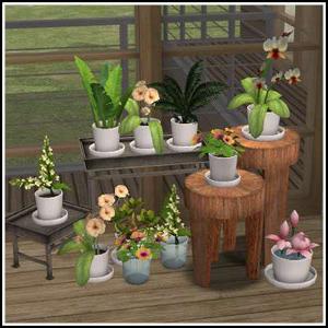 Цветы для дома - Страница 9 Image461