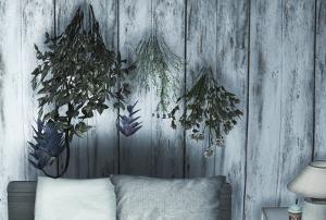 Цветы для дома - Страница 9 Image466