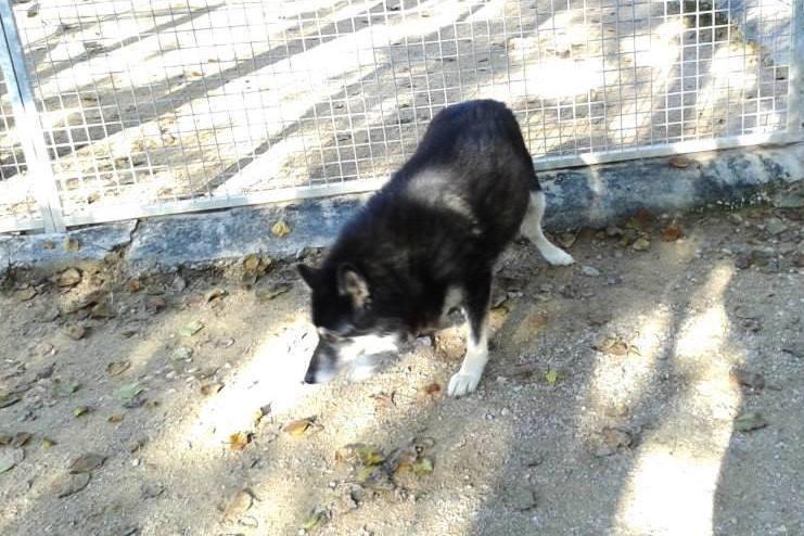 ULLA X Husky née en janvier 2001( f ) adoption uniquement REFU83  - Page 2 12195810