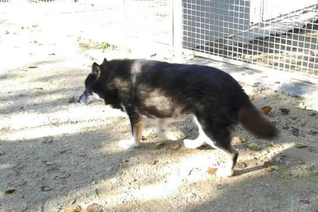 ULLA X Husky née en janvier 2001( f ) adoption uniquement REFU83  - Page 2 12239510