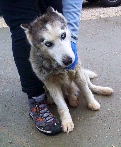 Sauvetage! Taiga, femelle Husky REFU39 12509610