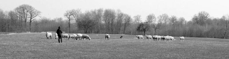 troupeau - Bêtisier entrainement troupeau 10379910