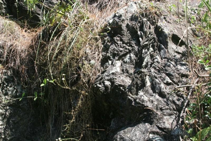 Mammillaria laui Img_6217