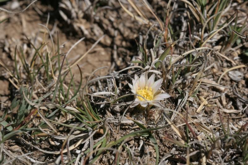 Mammillaria weingartiana Img_8819