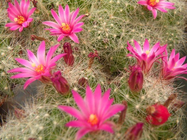 blooms , may 2010 Kraehe11