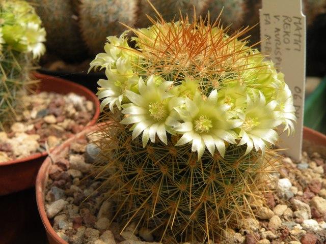 blooms , may 2010 Rekoi_10