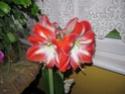 La fleur d'aujourd'hui... - Page 14 Img_0510