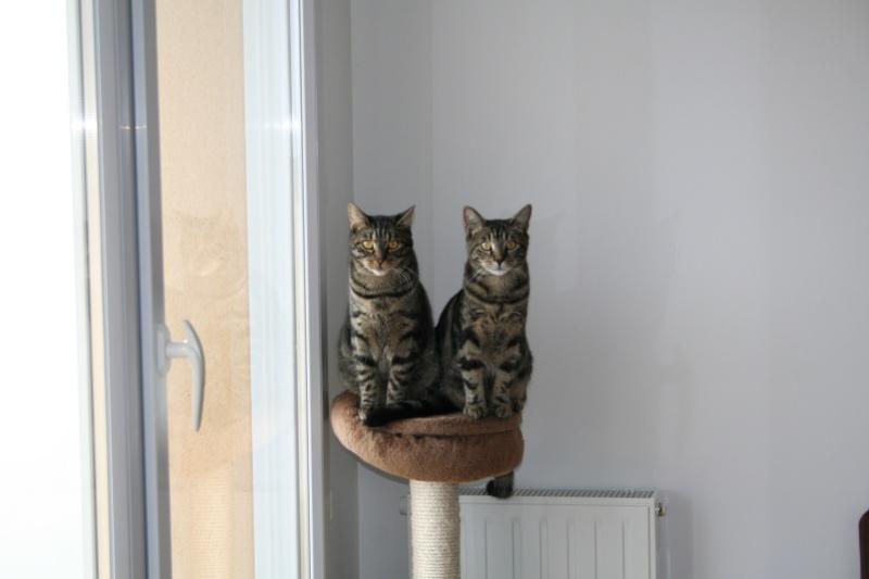 Simba et Peeter, petites boules d'amour... Peeter13