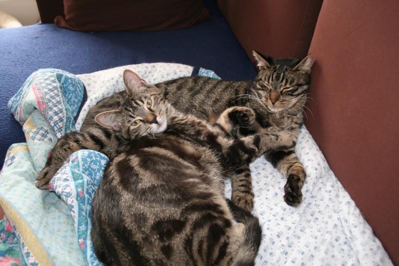 Simba et Peeter, petites boules d'amour... Peeter14