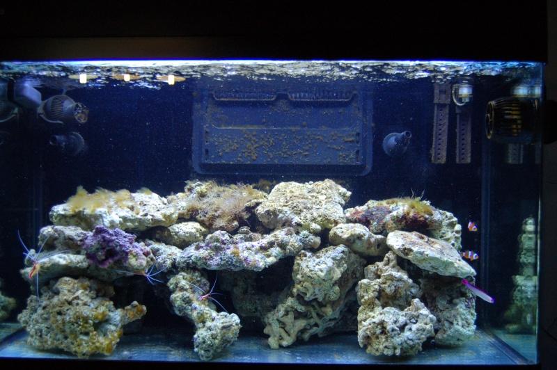 demarrage de mon Red Sea Max 250 suivi quotidien - Page 5 Dsc_0015