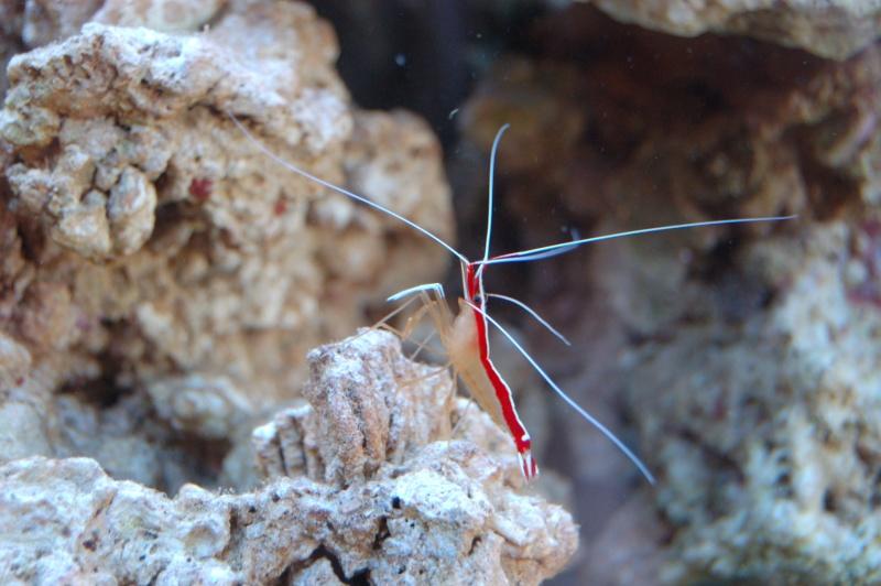 demarrage de mon Red Sea Max 250 suivi quotidien - Page 5 Dsc_0018