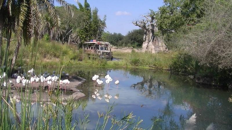 [Walt Disney World Resort] Disney's Animal Kingdom Florid12