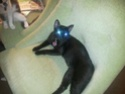 Mah kitty cat 14492711