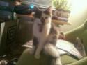 Mah kitty cat 14492717