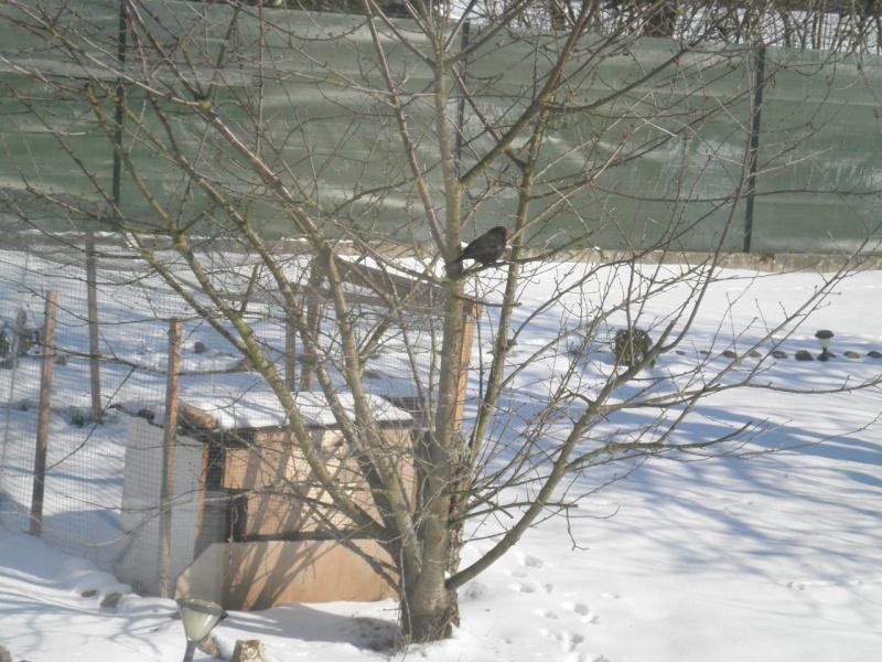 JAN-FEV les animaux et l'hiver : vos plus belles photos P2070320