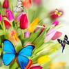 butterfly**