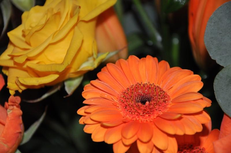 Vos bouquets de fleurs Dsc_0912