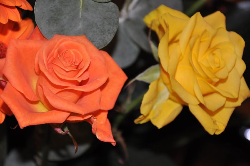 Vos bouquets de fleurs Dsc_0913