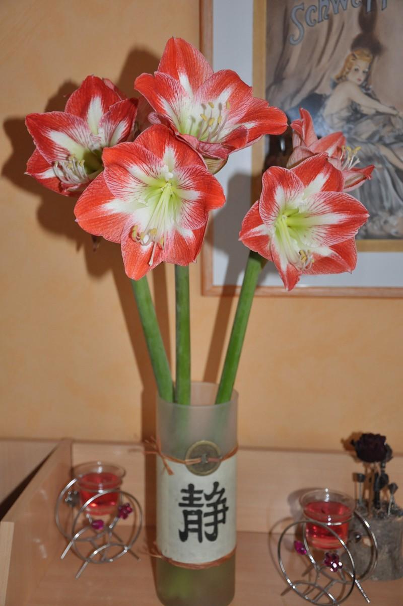 Vos bouquets de fleurs Dsc_1010