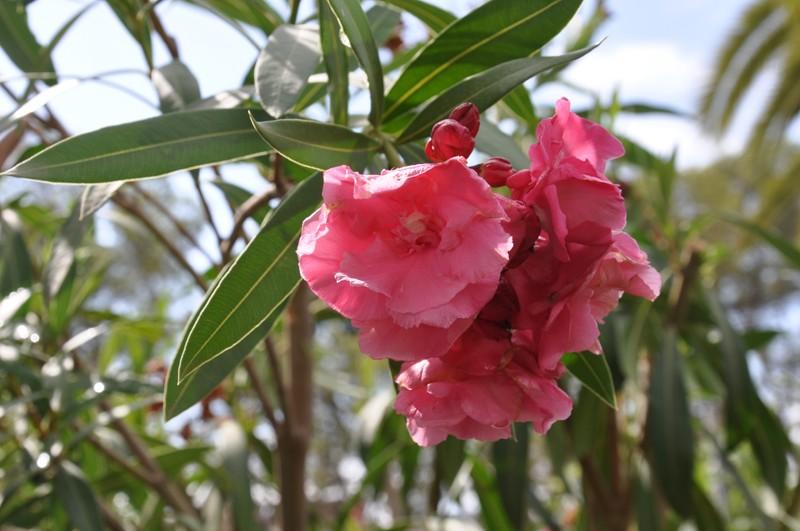 Les Fleurs Dsc_5111