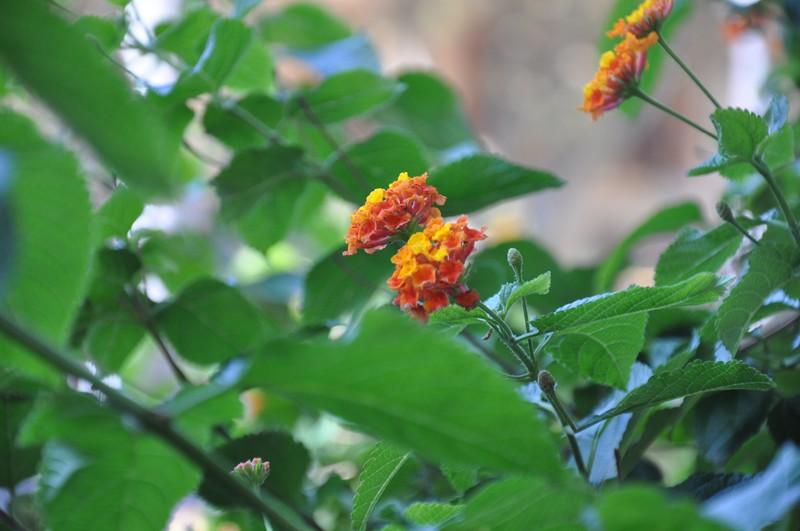 Les Fleurs Dsc_5910