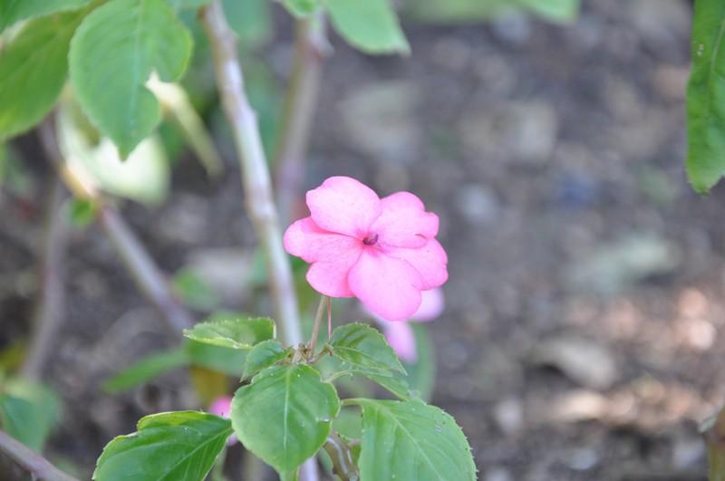 Les Fleurs Dsc_5911