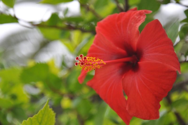 Les Fleurs Dsc_6010