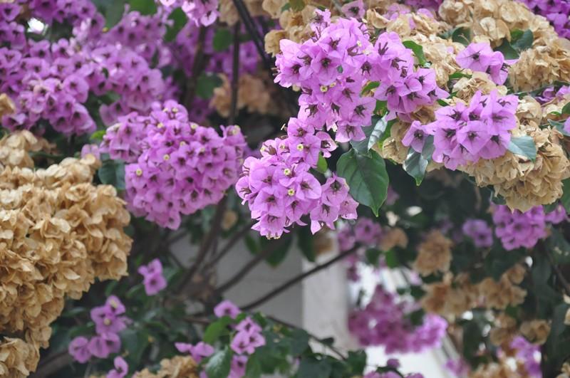 Les Fleurs Dsc_6016