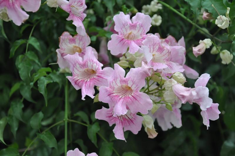 Les Fleurs Dsc_6017