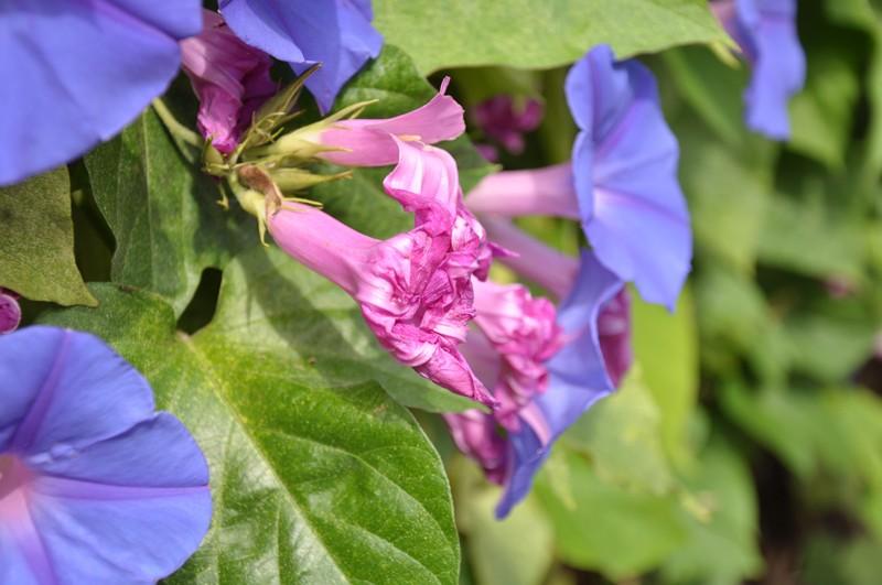 Les Fleurs Dsc_6411