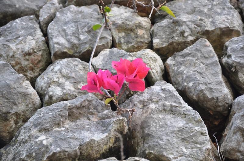 Les Fleurs Dsc_6412