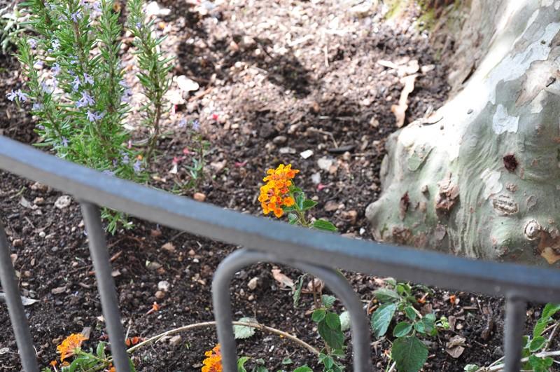 Les Fleurs Dsc_6416