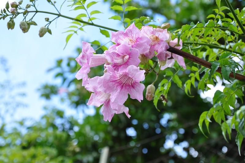 Les Fleurs Dsc_6512