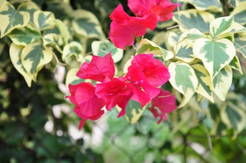 Les Fleurs Dsc_6513