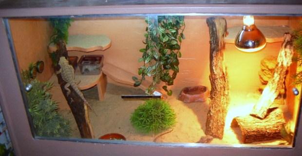 mon terrarium Imgp1914