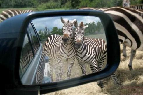 Photos humouristiques de nos amis les animaux... - Page 4 00000010