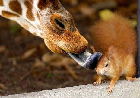 Photos humouristiques de nos amis les animaux... - Page 4 17627110